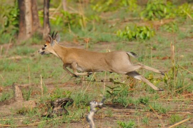 cephalope-grimm-running