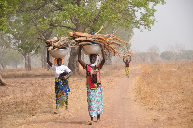 women-with-buckets-of-wood-bush-near-mango-harmattan