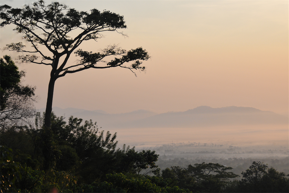 Tree-valley from Tsiko mountain at sunrise 1