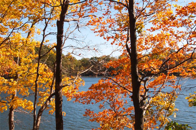 Fall colors-Ceasar Creek 8-trees and lake