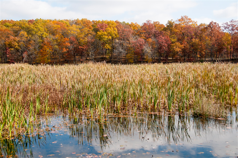 Kensington 32-cattails and fall colors