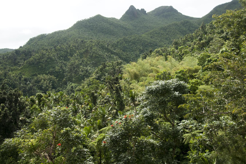 Puerto Rico Rainforest 2