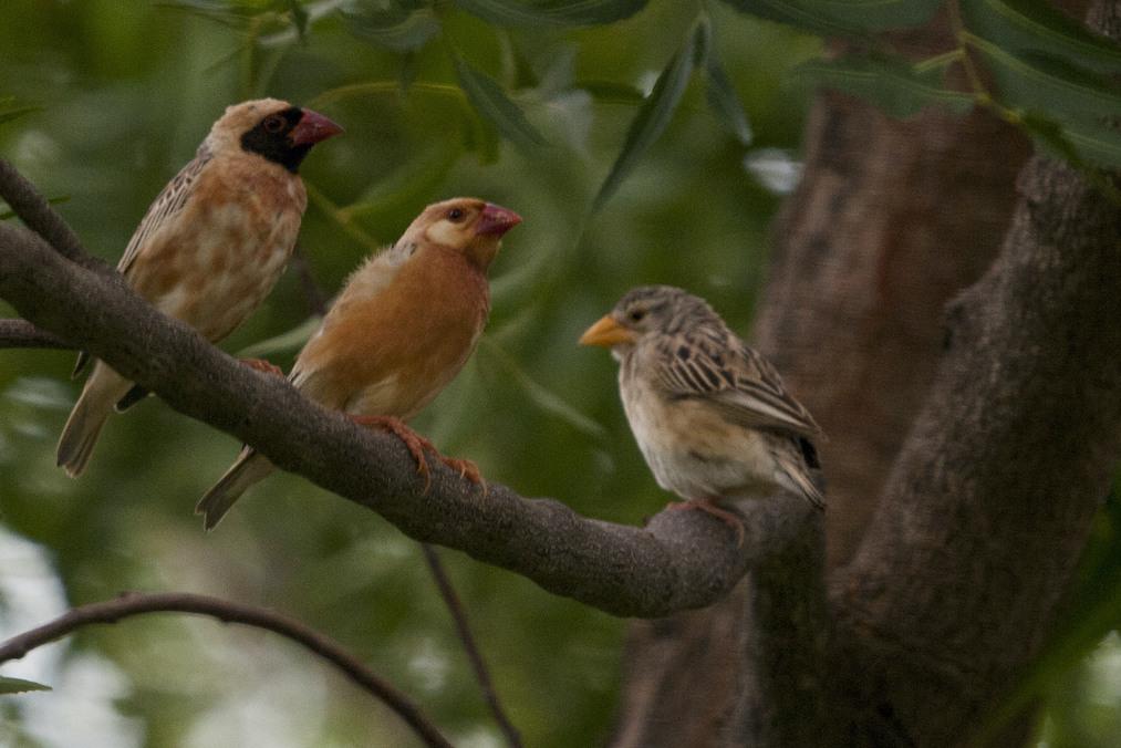 Birds at HOH 69
