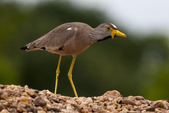 Birds at HOH 95