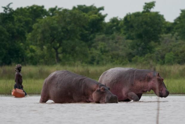 Hippos 6.2020 36