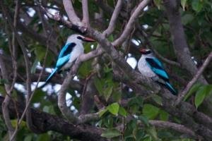 Lily Pond 30-blue birds